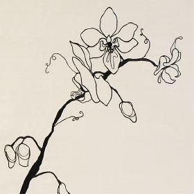 Orchid - Cream and Black - Cream silk fabric with modern flowering stem outline in black