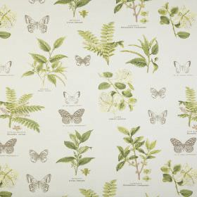 Botany - Acacia - Grey butterflies with realistic leaves shaded in green against a background of white fabric made from 100% cotton