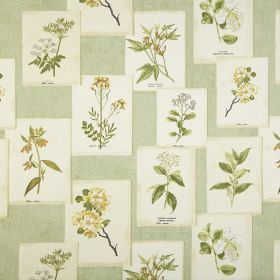 Journal - Acacia - 100% cotton fabric made in several different light shades of green, cream & grey, printed with realistic floral patterns