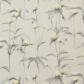Clarendon - Mimosa - Shaded grey leaves printed with yellow flower buds on a beige cotton fabric background