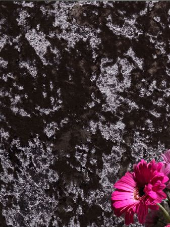 Fibre Naturelle -  Panther Fabric Collection - A hot pink daisy in front of a background of slightly textured velour effect fabric made in plain, dark gunmetal grey