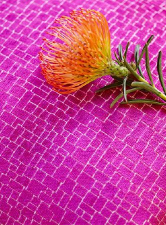 Prestigious Textiles -  Rocco Fabric Collection - A single bright orange pincushion protea flower lying on shocking pink fabric made with a very subtle tiny white pattern